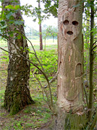 Alien in der Beegderheide